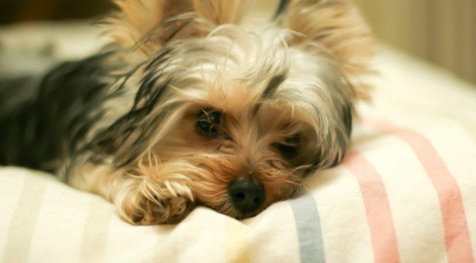 愛犬のせいにしていたセックスレス。夫の何気ない告白に死にたくなった70歳